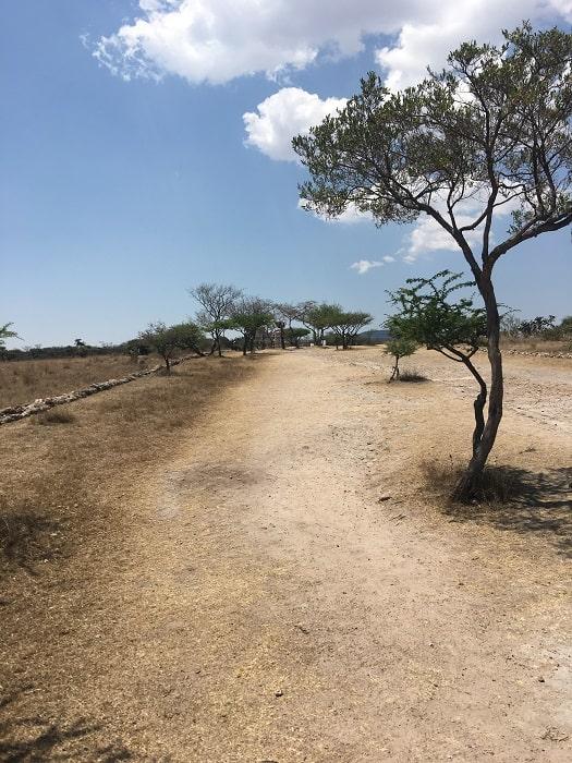 The Road Up to the Canada de la Virgen Pyramid