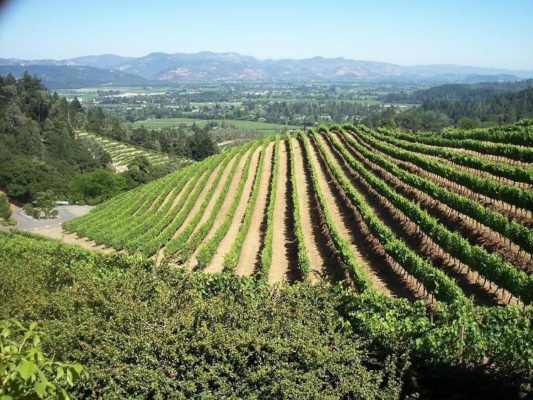 Vineyards on A HillSide