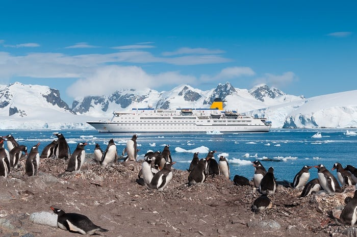 Antarctica penguin colony  - is this your Once in a Lifetime Cruise?