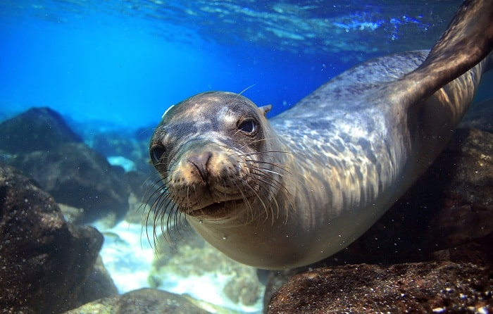 Galapagos-Seal - Can't Travel Right Now?