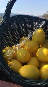 Home Made Limoncello Recipe