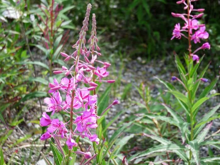 Wildflower Closeup