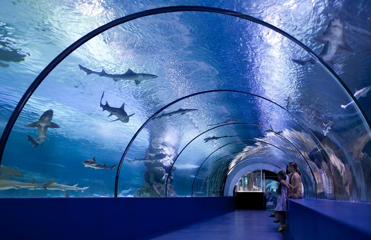 Things to do In Phoenix - Odysea Aquarium