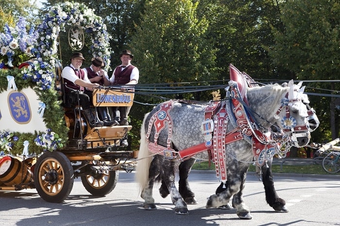 Horse Drawn Carriage in Oktoberfest Parade
