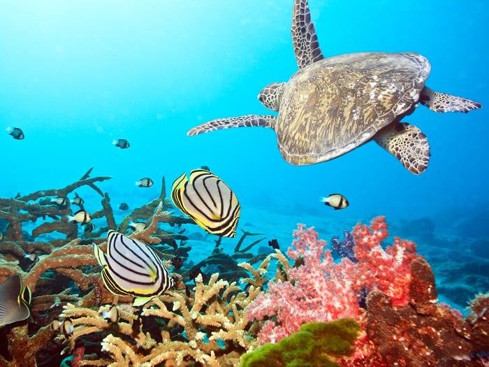 Maldives Sea Life 1