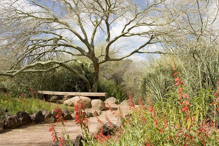 Desert Botanical Gardens - Phoenix