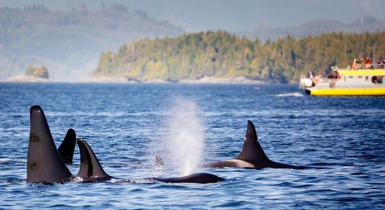 Whale Watching near Seattle