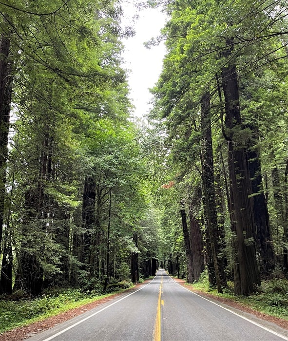 Avenue of the Giants - Northern California