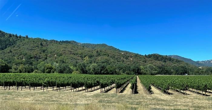 Vineyards in Mendocino County California