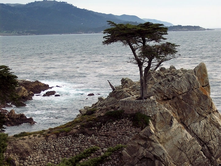 """the """"Lone Cypress"""" on the 17-mile drive in Carmel"""