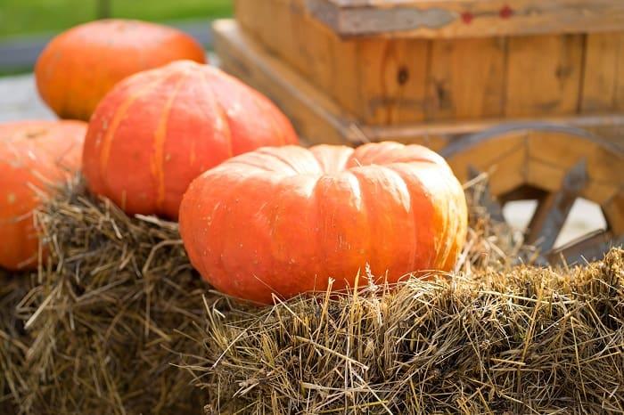 Pumpkin Festival - Halfmoon Bay California Highway 1